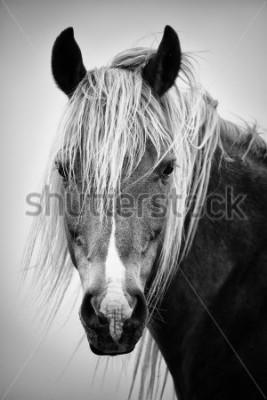 Naklejka Czarno-biały portret konia
