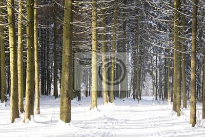 Czas świąt. Zimowy krajobraz