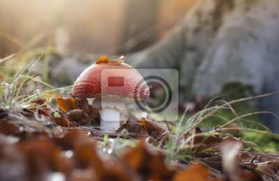 czerwone grzyby w lesie o zachodzie słońca widok przyziemnej