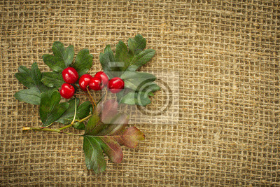Czerwone jagody głogu jesienią