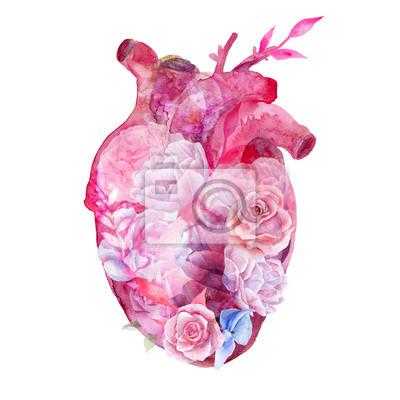 Czerwone serce akwarela