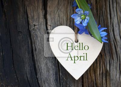 Naklejka Cześć Kwiecień kartka z pozdrowieniami z błękitnymi pierwszy wiosennymi kwiatami na drewnianym tle. Wiosenny pojęcie. Selekcyjna ostrość.