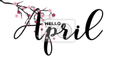 Naklejka Cześć Kwiecień, wiosna odnosić się motywacyjną wycena, odizolowywającą na białym tle, wektorowa ilustracja. Odręczne litery, japoński gałąź sakura, małe słodkie kwiaty spadają.