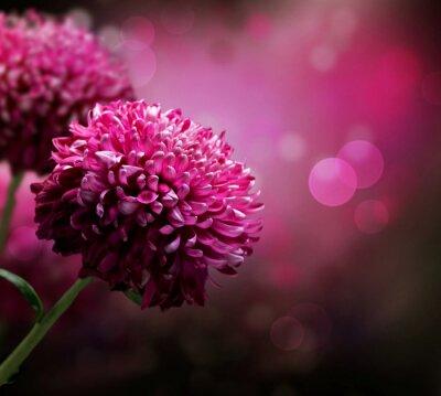 Dahlia Autumn flower design . Z kopiowaniem miejsca