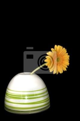Daisy i wazon