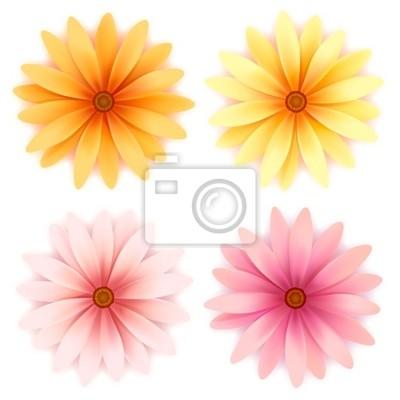 Daisy kwiaty wektor zestaw samodzielnie na białym tle