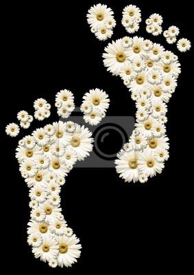 Daisy ślady
