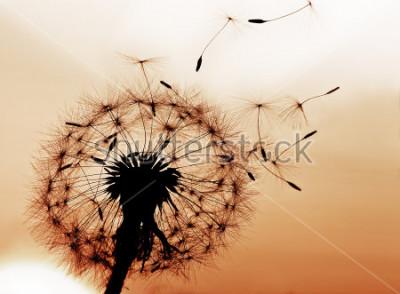 Naklejka Dandelion dmuchanie nasion na wietrze.