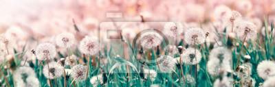 Naklejka Dandelion seeds, selective and soft focus on dandelion seeds - beautiful nature in spring and summer