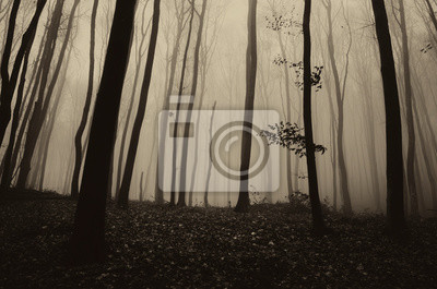 dark gloomy forest landscape, scary woods scenery with dark trees in fog