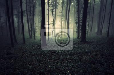 dark magical forest, fantasy landscape