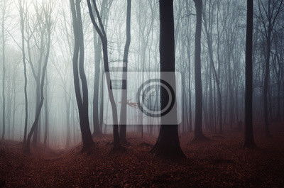 dark mysterious woods landscape, misty forest scenery
