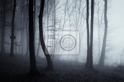 dark mysterious woods, trees in fog in fantasy forest