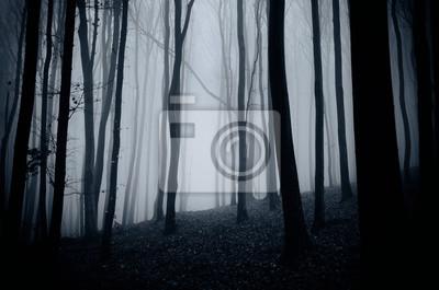 dark woods background, night landscape in dense forest