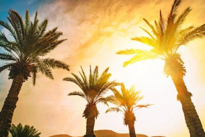 Naklejka Date palms on beach with sunflare. Wallpaper, background