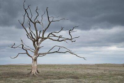 Naklejka Dead tree in a barren landscape