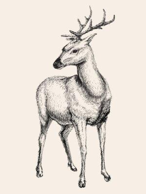 Naklejka Deer ilustracji wektorowych, wyciągnąć rękę, szkic