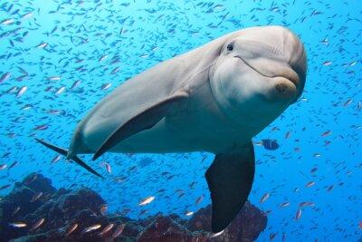 Naklejka Delfin na podwodne rafy tle