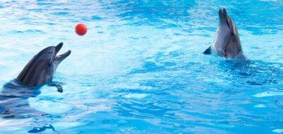 Naklejka Delfiny grać piłki