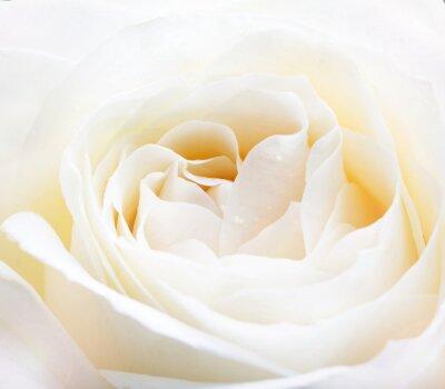 Naklejka Delikatne białe wzrosła bliska obraz