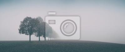 Naklejka Desolate Autumn Landscape, Row of Trees in Thick Fog