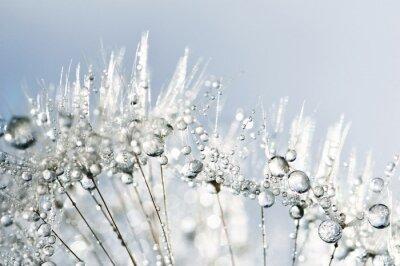 Naklejka Dewy dandelion