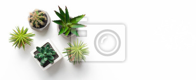 Naklejka Different succulent and cacti plants in pots on white background