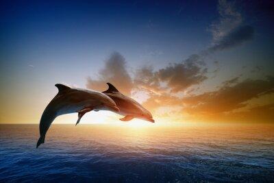 Naklejka Dolphins Jumping