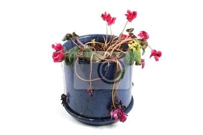 doniczka z zwiędłe kwiaty
