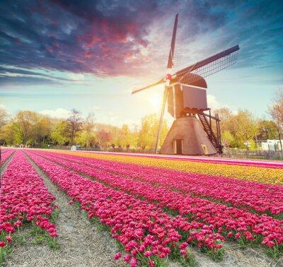 Naklejka Droga prowadząca do holenderskich wiatraków z kanału w Rotterdamie. Holandia. Holandia