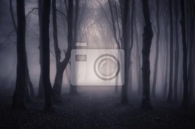 droga przez ciemny las w nocy