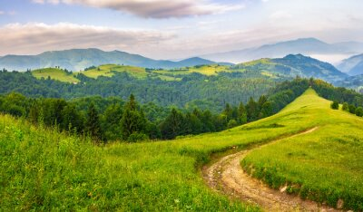 Naklejka Droga przez las iglasty w górach na wschód słońca