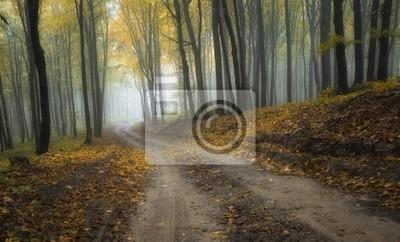 Droga przez las misty z pięknymi kolorami jesienią