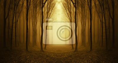 Droga przez las na wschód słońca złoty
