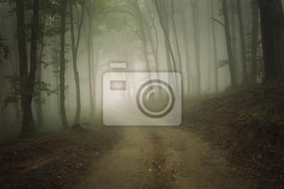 Droga przez las z mgłą w lecie
