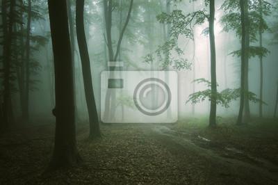 Droga przez zielony las z starych drzew