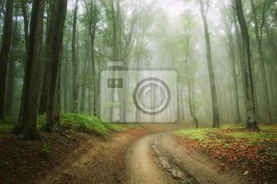Droga w lesie mgła koryta