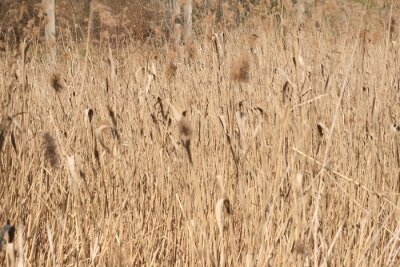 dry grass in the wind