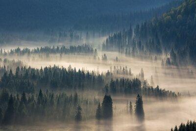 Naklejka drzew na łąki w dół woli lasu iglastego w mglisty górach