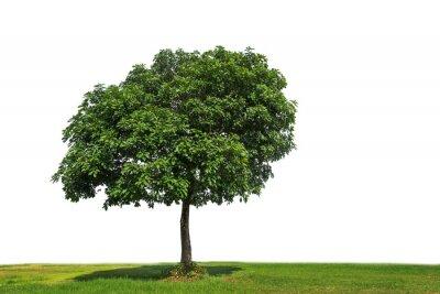 drzewa na białym tle