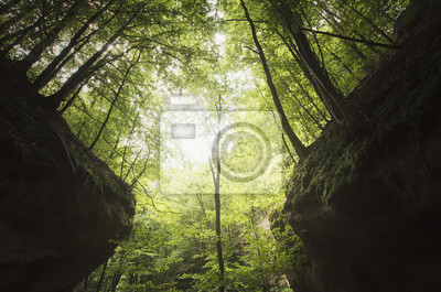 drzewa na kanion klify w zielonym lesie, naturalny symetryczny krajobraz