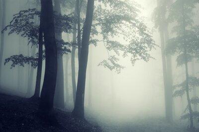 drzewa przeciw światło w ciemnym lesie
