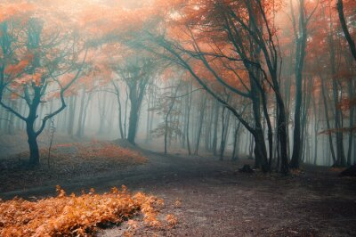 drzewa z czerwonych liści w lesie z mgły