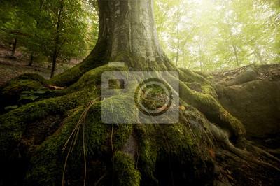 drzewa z mchu na korzeniach w zielonym lesie na wiosnę