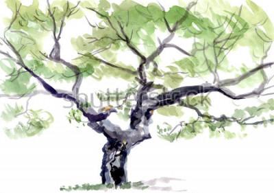 Naklejka drzewo, akwarela