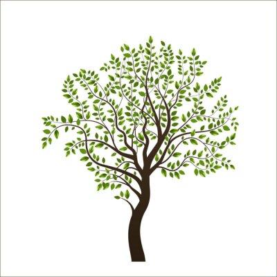 Naklejka Drzewo na białym tle