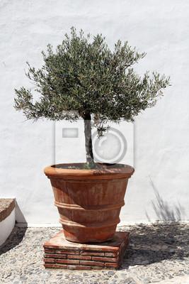 Naklejka Drzewo Oliwne W Klasycznym Terakota Doniczki