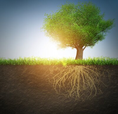 Naklejka drzewo z korzeniami