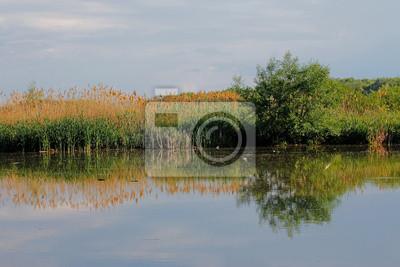 Drzewo z trawą odbicie w wodzie