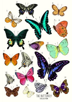 Naklejka Duża kolekcja motyli, ręcznie rysowane zestaw isolated.Vector Ilustracja